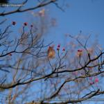 [Photo] 写真散歩 @横浜・大倉山公園